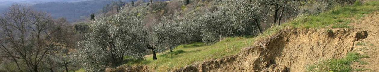 IFFI Bacino Arno