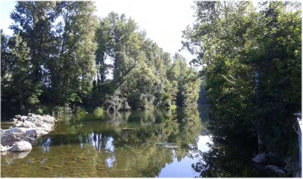 Arno a Buonriposo a monte 05/07/2015 - report Arpat (CTA)