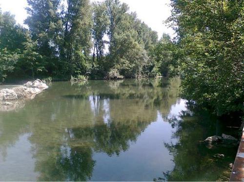 Arno a Buonriposo a valle 20/06/2013 - report Arpat (CTA)