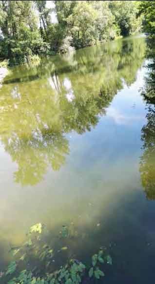 Arno a Buonriposo Monte, 01/08/2017 report Arpat (CTA)
